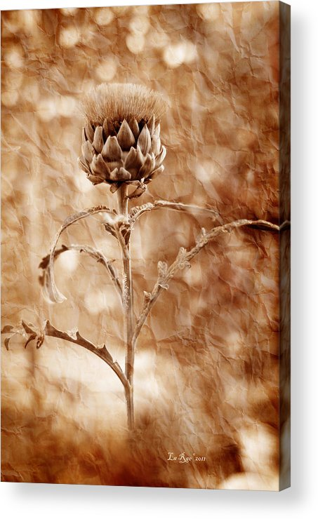 Flower Acrylic Print featuring the photograph Artichoke Bloom by La Rae Roberts