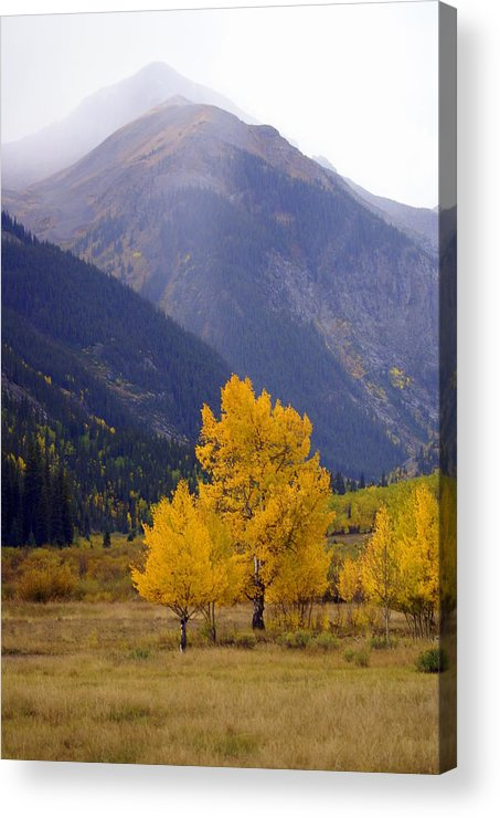 Fall Colors Acrylic Print featuring the photograph Aspen Fall 4 by Marty Koch