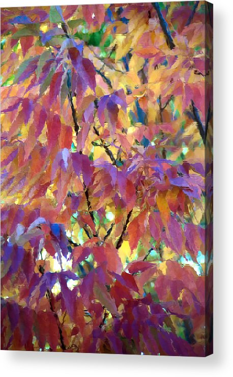 Ash Tree Acrylic Print featuring the photograph Autumn Ash Tree 3 by Steve Ohlsen