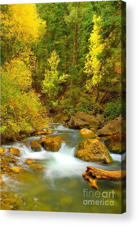 Utah Acrylic Print featuring the photograph Autumn On Big Cottonwood River by Dennis Hammer
