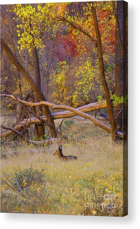 Deer Acrylic Print featuring the photograph Autumn Yearling by Dennis Hammer
