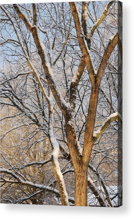 Trees. Branches Acrylic Print featuring the photograph Bare Branches by Trudi Southerland