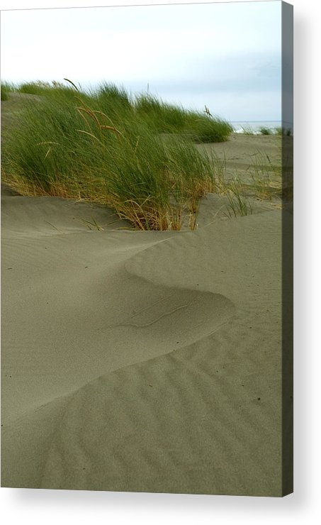 Beach Acrylic Print featuring the photograph Beach Grass by Jessica Wakefield