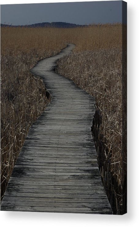 Landscape Acrylic Print featuring the photograph Boardwalk by Eric Workman
