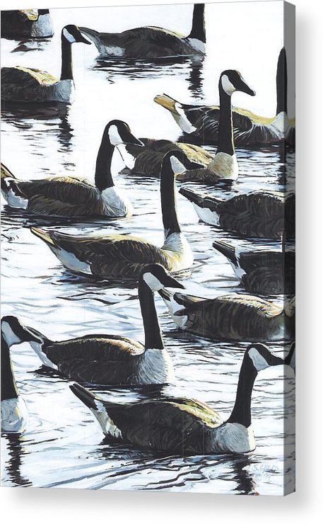 Wildllife Acrylic Print featuring the painting Canada Geese 1 by Steve Greco