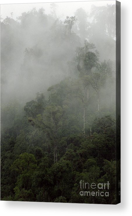 Rainforest Acrylic Print featuring the photograph Cloud Forest by Kathy McClure