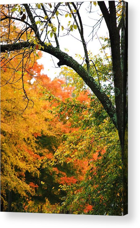Trees Acrylic Print featuring the photograph Colors That I See by Trudi Southerland