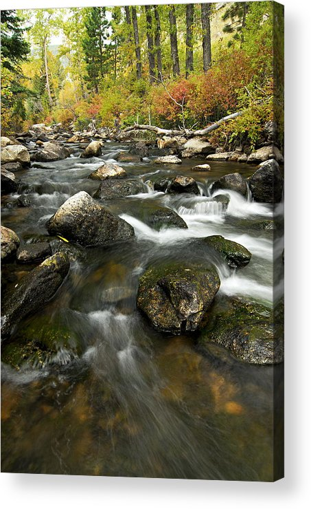 Crazy Woman Creek Acrylic Print featuring the photograph Crazy Woman Creek In Autumn by Larry Ricker