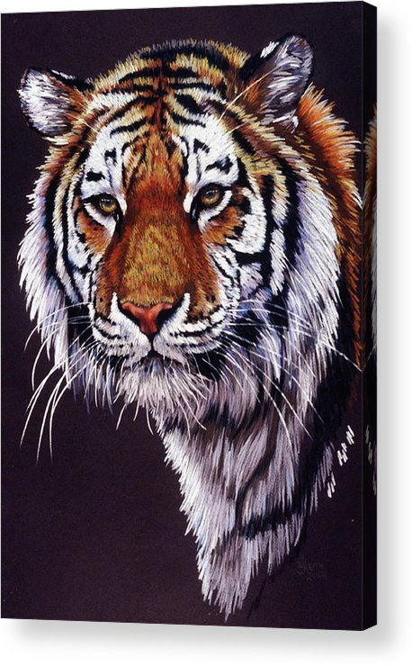 Tiger Acrylic Print featuring the drawing Desperado by Barbara Keith