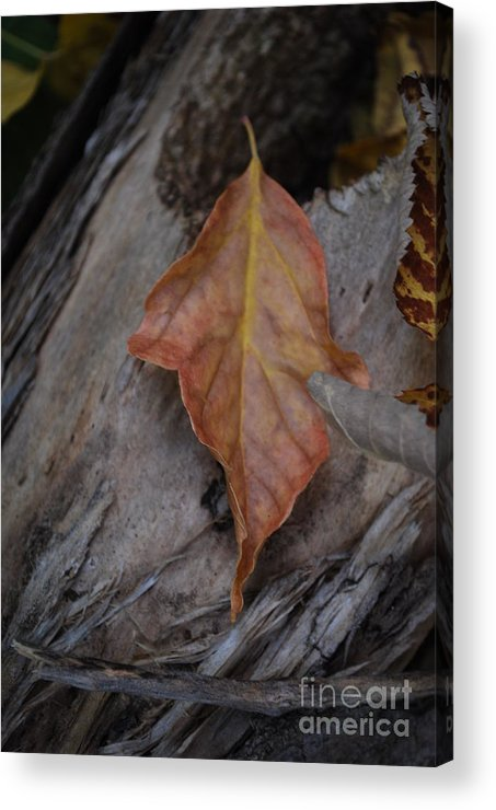 Fall Acrylic Print featuring the photograph Dried Leaf On Log by Heather Kirk