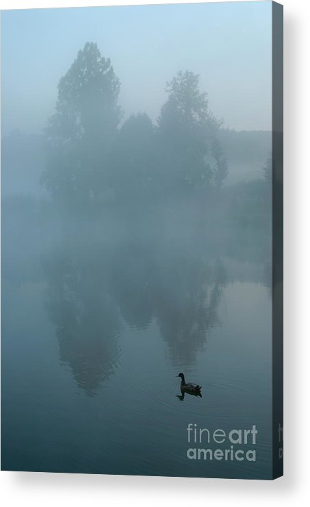 Mystery Acrylic Print featuring the photograph Duck In Pond by Sami Sarkis