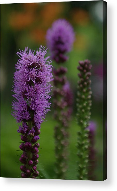Nature Acrylic Print featuring the photograph Flowers 4 by Eric Workman