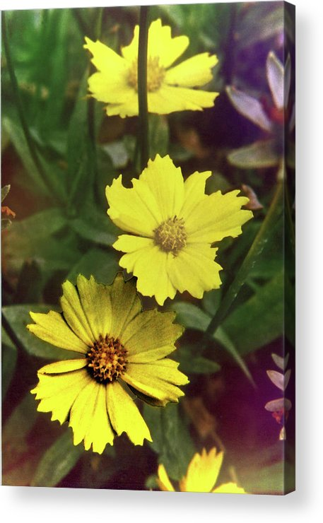 Flowers Acrylic Print featuring the photograph Flowers by Eileen Blair