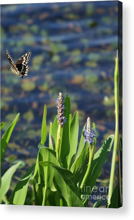Plants Acrylic Print featuring the photograph Fly Be Free by Jack Norton