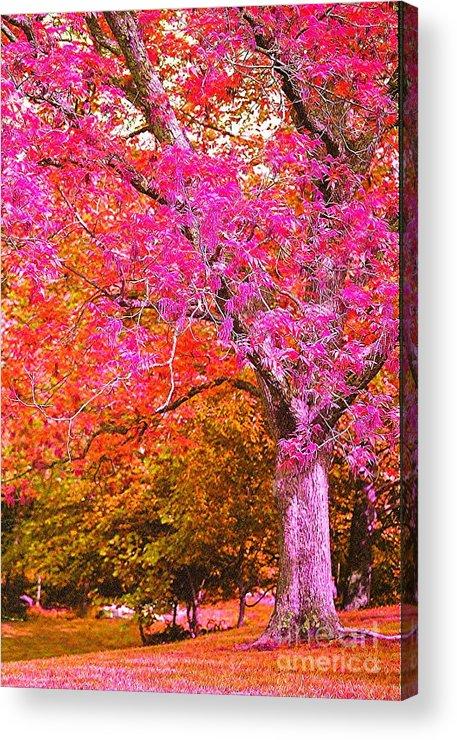 Fuschia Acrylic Print featuring the photograph Fuschia Tree by Nadine Rippelmeyer