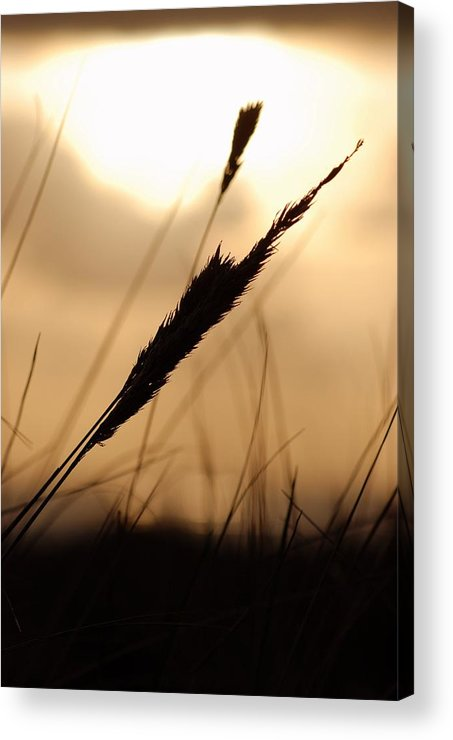 Acrylic Print featuring the photograph Grass by JK Photography