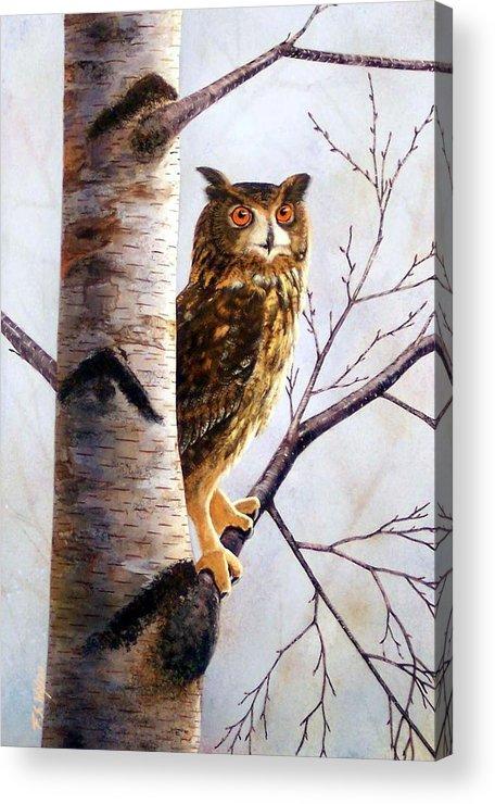 Great Horned Owl In Birch Acrylic Print featuring the painting Great Horned Owl In Birch by Frank Wilson