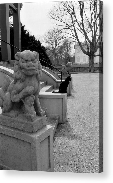 Cat Acrylic Print featuring the photograph Imposter by Jeff Porter