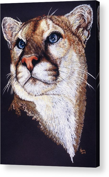 Cougar Acrylic Print featuring the drawing Intense by Barbara Keith