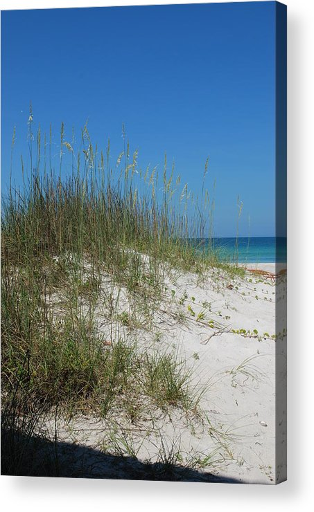 Beach Acrylic Print featuring the photograph Island Sea Oats by Lisa Gabrius