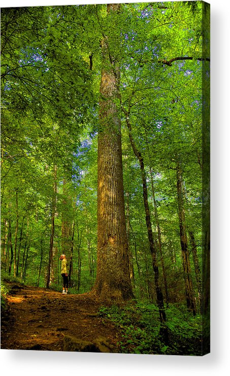Forest Acrylic Print featuring the painting Lady And The Tree by David Lee Thompson