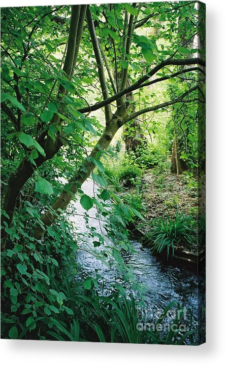 Photography Acrylic Print featuring the photograph Monet's Garden Stream by Nadine Rippelmeyer