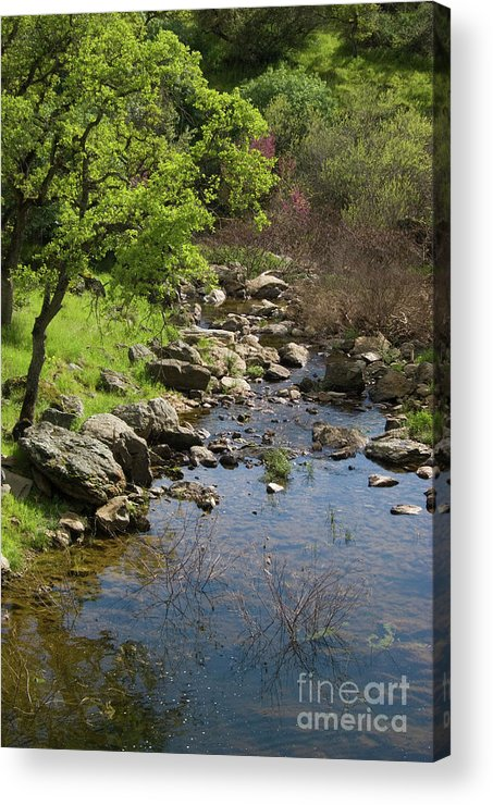 Oak Acrylic Print featuring the photograph Owl Creek by Jim And Emily Bush