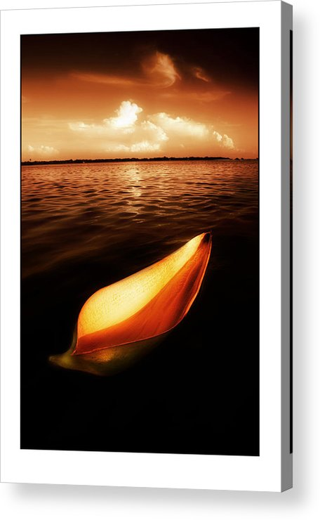 Palm Acrylic Print featuring the photograph Palm Leaf Sheath Boat by Mal Bray