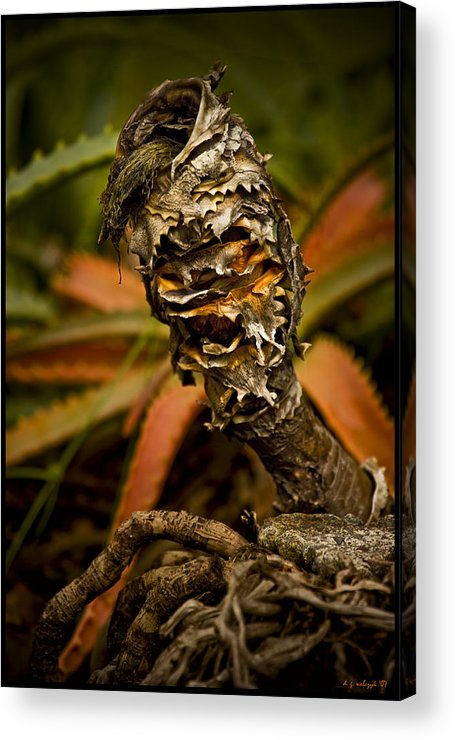 Flora Acrylic Print featuring the photograph Palm Root Kahuna by Daniel G Walczyk