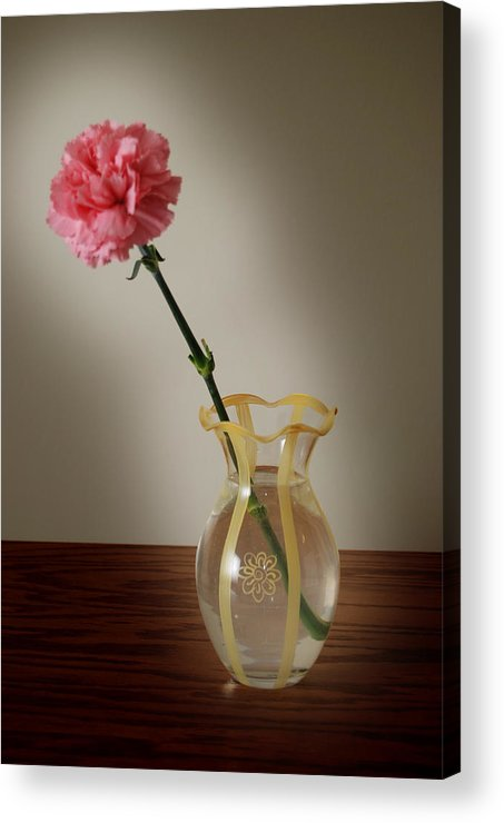 Flower Acrylic Print featuring the photograph Pink Carnation by Dave Chafin