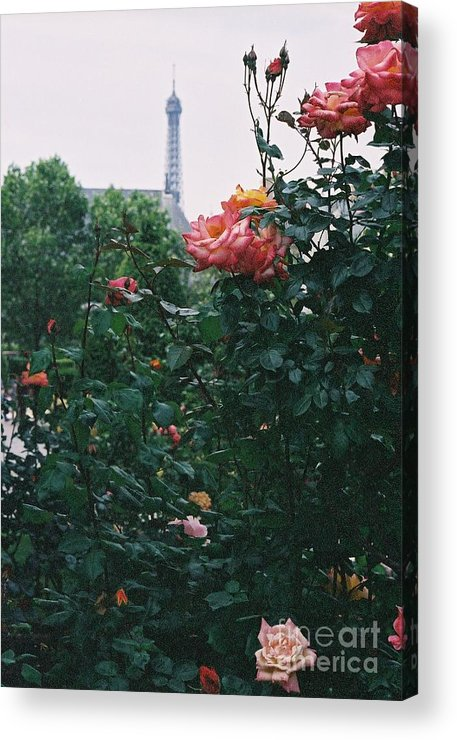 Roses Acrylic Print featuring the photograph Pink Roses And The Eiffel Tower by Nadine Rippelmeyer