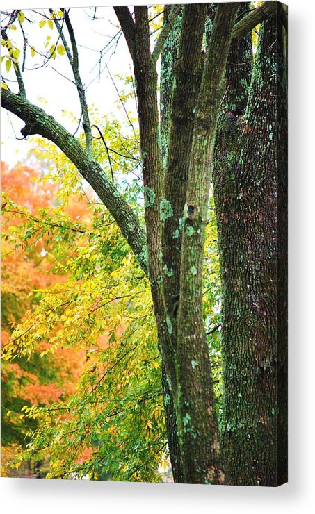 Trees Acrylic Print featuring the photograph Seasons by Trudi Southerland