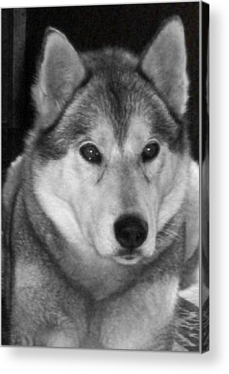 Dog Acrylic Print featuring the photograph Sheba by Lisa Hebert
