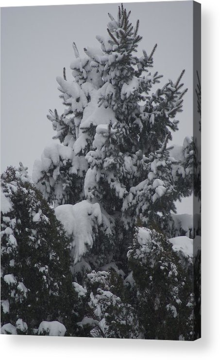 Snow Acrylic Print featuring the photograph Snow Covered Pine by Heather Green