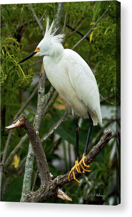 Bird Acrylic Print featuring the photograph Spiked by Christopher Holmes