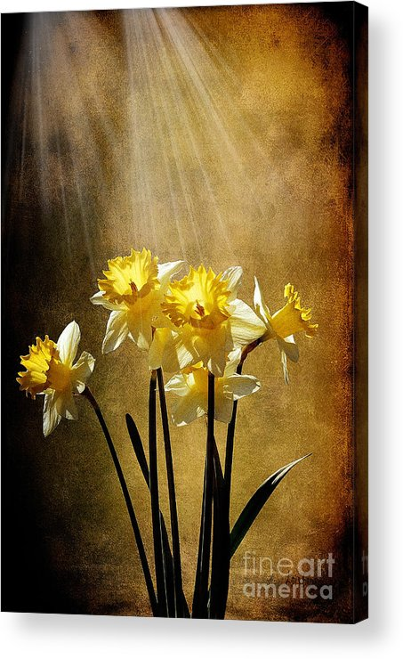Daffodils Acrylic Print featuring the photograph Spring Sun by Lois Bryan