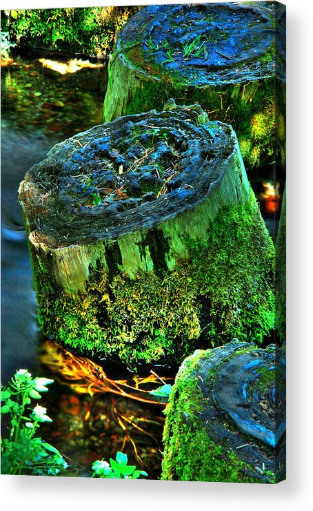 Stump Acrylic Print featuring the photograph Stumped by Tom Melo