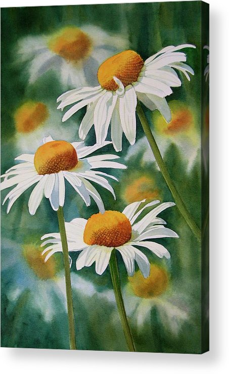 Watercolour Acrylic Print featuring the painting Three Wild Daisies by Sharon Freeman