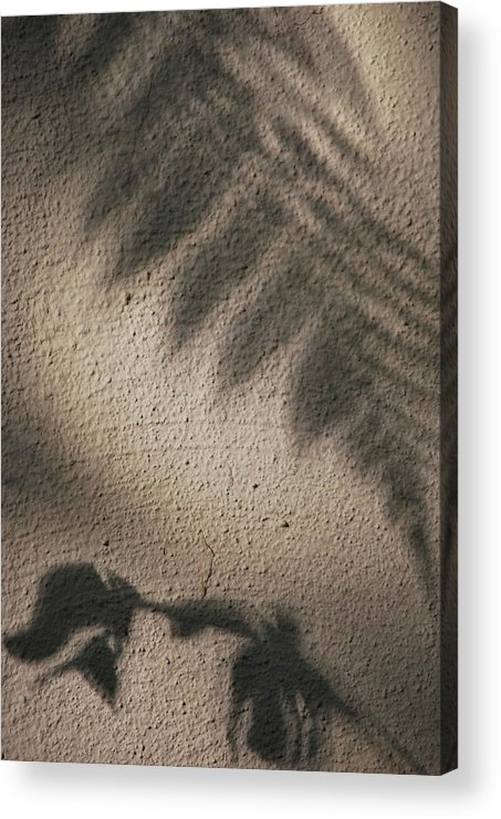 Shadows Acrylic Print featuring the photograph Wall Flowers by Lori Leigh