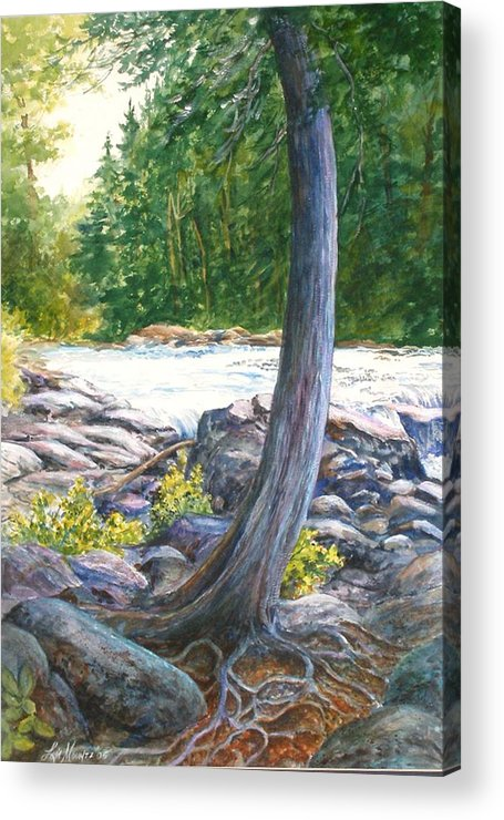 Trees;roots;water;pine Trees;rocks;adirondacks; Acrylic Print featuring the painting Weathered Roots Of Time by Lois Mountz