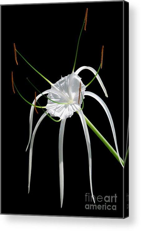 Photograpny White Flower Black Green Acrylic Print featuring the photograph White Flower by Ty Lee