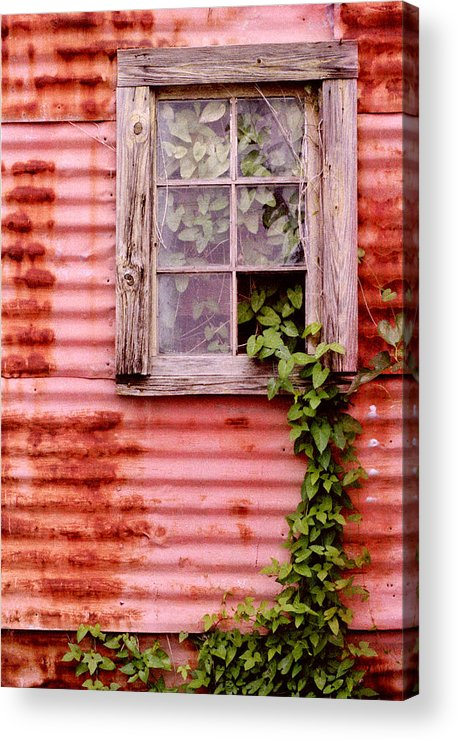 Window Acrylic Print featuring the photograph Window Of Ivy by Andrew Giovinazzo