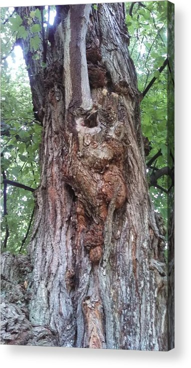 Tree Acrylic Print featuring the photograph A Tree Creature by Paula Talbert