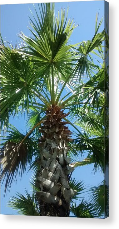 Florida Palm Tree Acrylic Print featuring the photograph Florida Palm Tree by Zech Browning