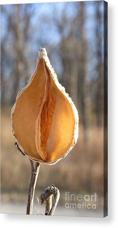 Milkweed Acrylic Print featuring the photograph She by Valerie Fuqua