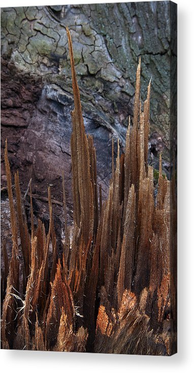 Shred Acrylic Print featuring the photograph Wood Shreds by Murray Bloom