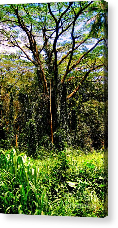 Oahu Acrylic Print featuring the photograph Oahu Rainforest by Iris Vanessa Hood
