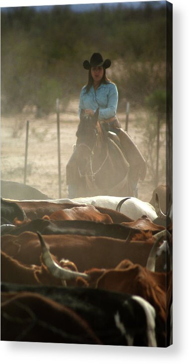Horse Acrylic Print featuring the photograph Cattle Drive by James Comstock