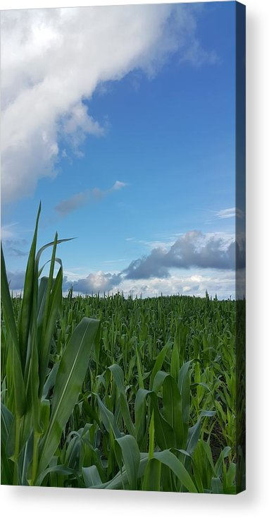 Corn Acrylic Print featuring the photograph Corn Field by Yazid Ismail