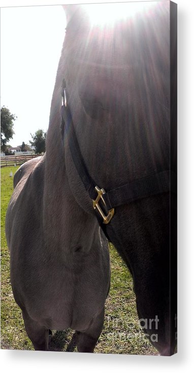 Horse Acrylic Print featuring the photograph Ive Got Sunshine by LKB Art and Photography